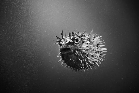Un viaje hacia el interior del ser humano a través de fotografías en blanco y negro