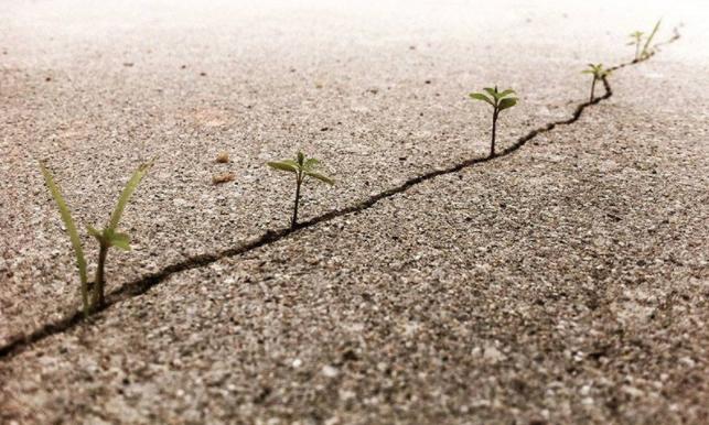 la-vida-persevera-arttextum2