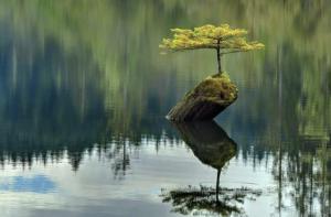 La vida persevera y encuentra el camino