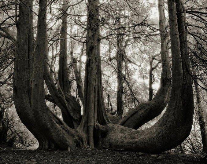 14 años fotografiando los árboles vivos más viejos del mundo