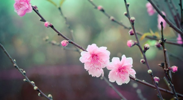 10 hermosas palabras japonesas que no existen en español
