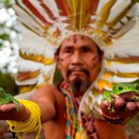 Chamanes del Amazonas escriben enciclopedia de medicina tradicional