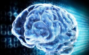 Hablemos de neurociencia