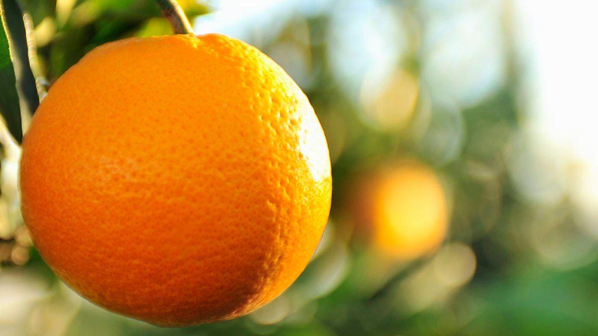 Plástico biodegradable hecho con cáscaras de naranja: un invento orgullosamente mexicano