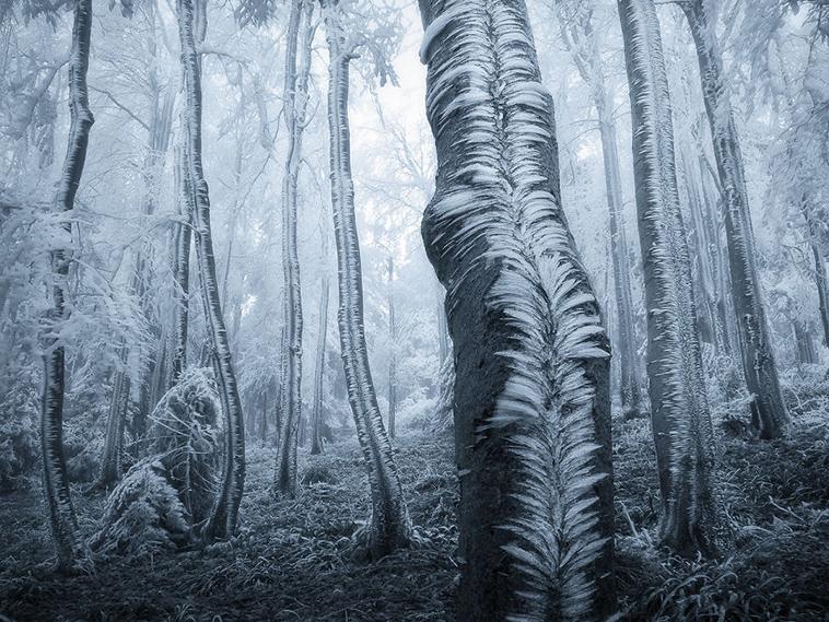frozen-ice-art-28-arttextum-replicacion.jpg
