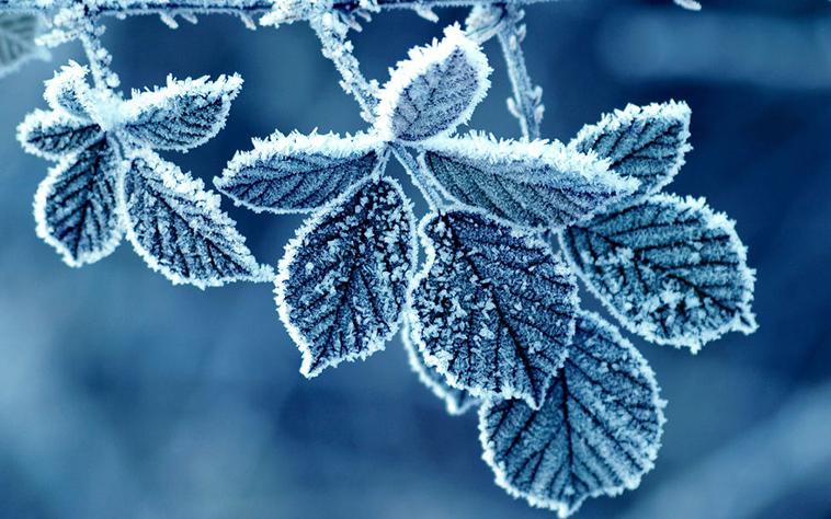 frozen-ice-art-29-arttextum-replcacion.jpg