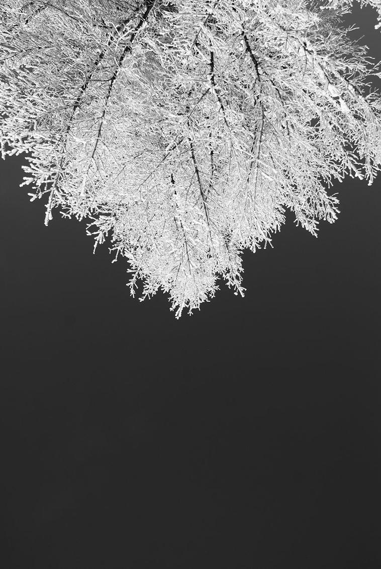 frozen-ice-art-31-arttextum-replicacion.jpg