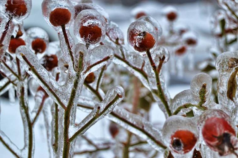 frozen-ice-art-40-arttextum-replicacion.jpg
