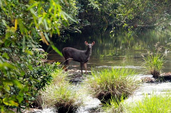 wildlife-forest-arttextum-replicacion8.jpg