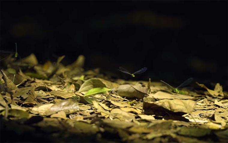 wildlife-forest-protection-arttextum-replicacion10.jpg