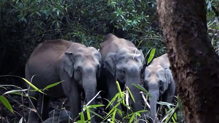 wildlife-forest-protection-arttextum-replicacion13.jpg