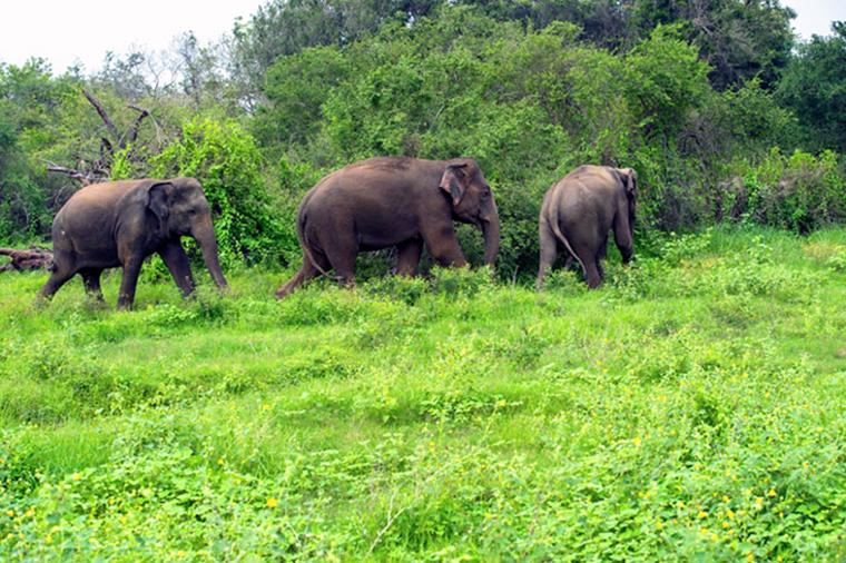wildlife-forest-protection-arttextum-replicacion5.jpg